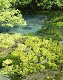 柿田川の写真素材 [FYI03298109]