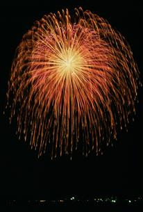 えどさき夏まつり 10号 八重芯錦冠菊の写真素材 [FYI03298252]