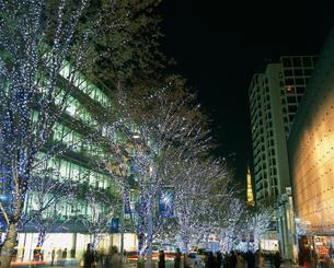 六本木けやき坂通りクリスマスイルミネーションの写真素材 [FYI03298376]