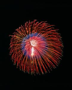 土浦全国花火競技大会 割物 昇り曲導付三重芯変化菊の写真素材 [FYI03298436]