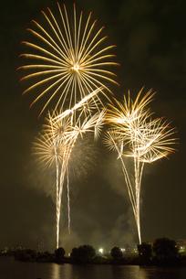 大田区の花火の祭典 スターマインの写真素材 [FYI03298591]