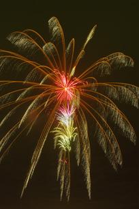 昇小花付紅芯スパン芯オーロラ牡丹の写真素材 [FYI03298609]