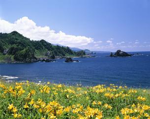 キバナカンゾウ咲く外海府海岸の写真素材 [FYI03298797]