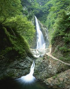 白神山地 暗門の滝の一ノ滝の写真素材 [FYI03298804]