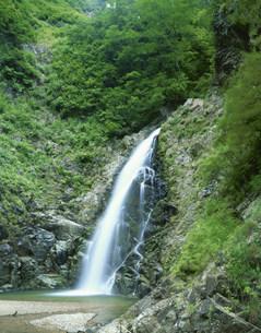 白神山地 暗門の滝の三ノ滝の写真素材 [FYI03298805]