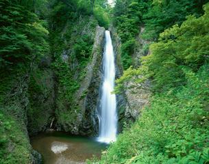 白神山地 暗門の滝 ニノ滝の写真素材 [FYI03298840]