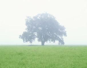 霧の草原と1本の木の写真素材 [FYI03299090]