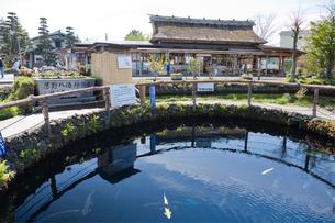 忍野八海の湧水池の写真素材 [FYI03299476]