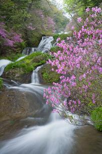 トウゴクミツバツツジ咲く竜頭の滝の写真素材 [FYI03299488]