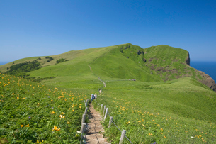 桃岩展望台コースより望むエゾカンゾウ咲く遊歩道の写真素材 [FYI03299501]