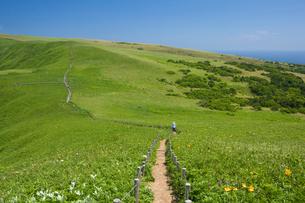 桃岩展望台コースより望むエゾカンゾウ咲く遊歩道の写真素材 [FYI03299509]