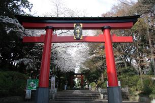 東京のへそ 大宮八幡宮の写真素材 [FYI03300423]