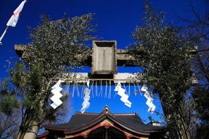 スサノオ神社 正月の鳥居の写真素材 [FYI03300592]