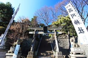 品川神社 狛犬と幟と鳥居の写真素材 [FYI03300612]