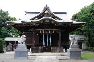 赤羽八幡神社 拝殿の写真素材 [FYI03300636]