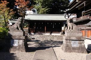 赤羽八幡神社 摂社の狛犬の写真素材 [FYI03300655]