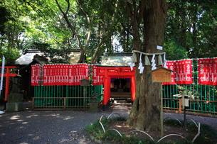 大宮八幡宮 末社稲荷の旗の写真素材 [FYI03300678]