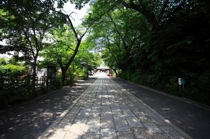 松陰神社 長く延びた参道の写真素材 [FYI03300681]
