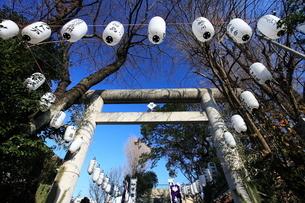 池袋御岳神社 正月提灯と鳥居の写真素材 [FYI03300713]
