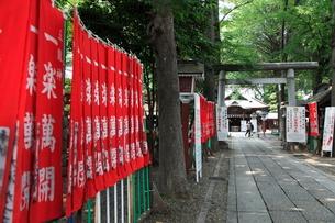田無神社 旗と参道の写真素材 [FYI03300725]