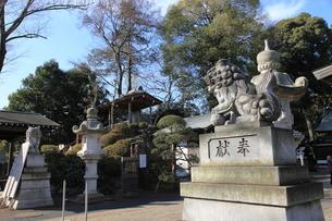 清瀬日枝神社 狛犬の写真素材 [FYI03300732]