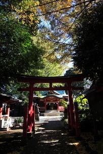 永福稲荷神社 境内の写真素材 [FYI03300793]