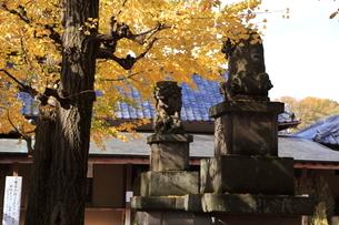 郷社石神井氷川神社 狛犬の写真素材 [FYI03300810]