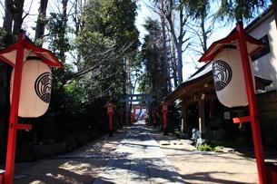 馬橋稲荷神社参道の写真素材 [FYI03300859]