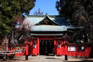 馬橋稲荷神社拝殿の写真素材 [FYI03300861]