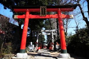 馬橋稲荷神社一の鳥居と参道の写真素材 [FYI03300863]
