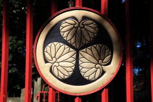 川越八幡宮葵の御紋の写真素材 [FYI03300919]