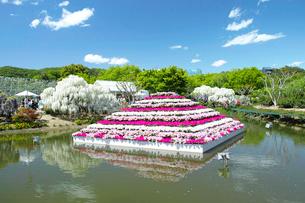 足利フラワ-パ-クの池の写真素材 [FYI03300937]