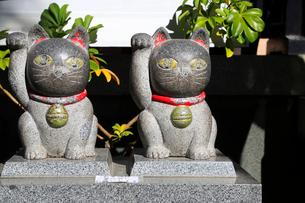 今戸神社境内招き猫の像の写真素材 [FYI03301082]
