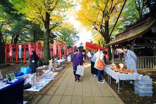 雑司ヶ谷鬼子母神堂フリ-マ-ケットの写真素材 [FYI03301101]