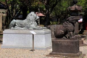 三囲神社 境内 三越のライオンの写真素材 [FYI03301268]