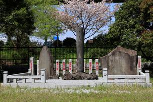 三囲神社 境内 東京消防保存会 木遣音頭碑の写真素材 [FYI03301269]