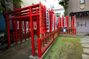 白笹稲荷神社 参道の鳥居と旗の写真素材 [FYI03301291]