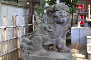 高円寺氷川神社摂社気象神社の狛犬の写真素材 [FYI03301300]