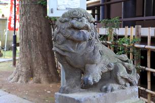 高円寺氷川神社摂社気象神社の狛犬の写真素材 [FYI03301301]