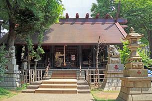 高円寺氷川神社拝殿の写真素材 [FYI03301306]