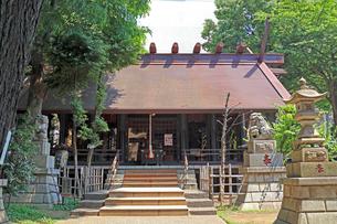 高円寺氷川神社拝殿の写真素材 [FYI03301314]