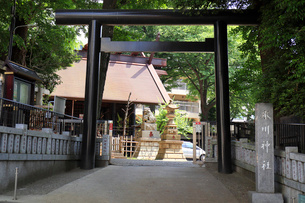 高円寺氷川神社社号標と鳥居の写真素材 [FYI03301358]