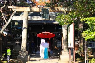 赤坂氷川神社の花嫁の写真素材 [FYI03301594]