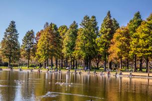 舎人公園の釣り人,水鳥,晩秋の写真素材 [FYI03301648]