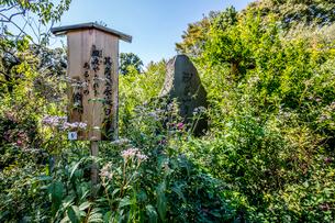 向島百花園、俳句の碑の写真素材 [FYI03301716]