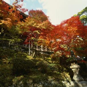 秋の円教寺 摩尼殿の写真素材 [FYI03302328]