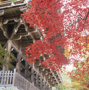秋の円教寺 摩尼殿の写真素材 [FYI03302337]
