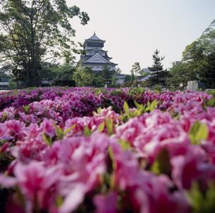 小倉城とツツジの写真素材 [FYI03302376]