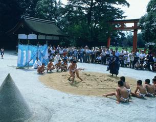 鳥相撲 上賀茂神社の写真素材 [FYI03303048]