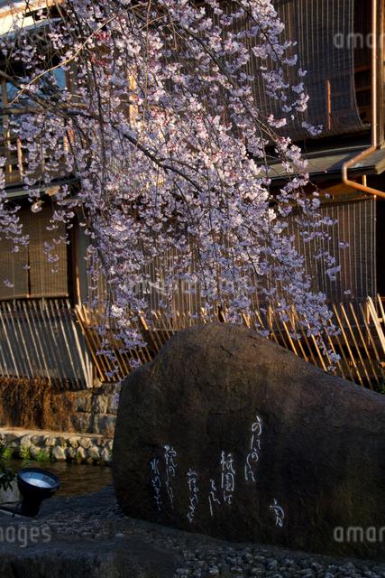 桜とかにかくに碑の写真素材 [FYI03303589]